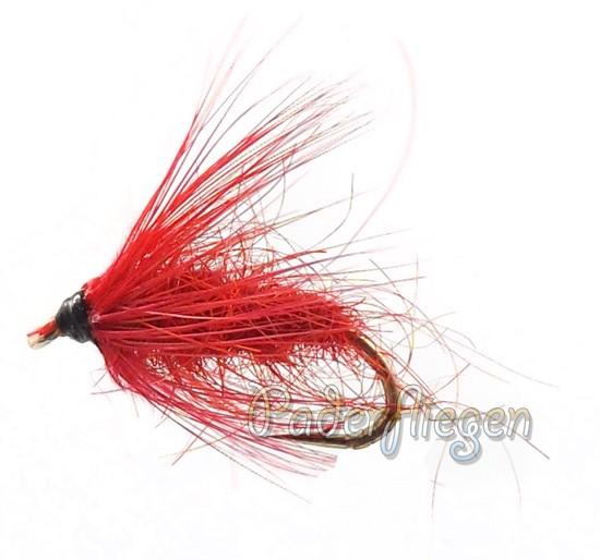 Carrot Fly